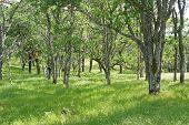 green grass amidst live oak