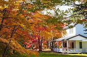 Karuizawa Autumn Scenery View, One Of Best-known Resort Villages In Japan. Colorful Tree With Red, O poster