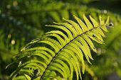 Ferns under the evening sun