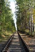 Railway Landscape. The Old Railway In Autumn Forest. Single-track Railroad In The Green Forest, poster