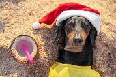 Adorable Black And Tan Dachshund Dog, Buried Under Sand On The Beach, Resting And Relaxing On A Seas poster