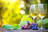 Wine. White Wine in wineglass. Romantic Dinner Outdoor. Wine tasting. Couple wine glasses and grapes poster