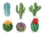 Realistic Cactuses. Decorative Desert Exotic Cactus Prickly Plants. Wild And Houseplant Succulent Ca poster