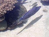 Eilat Oceanarium Beautiful Fish 2005