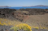 foto of nea  - Yellow flowers on the volcanic island Nea Kameni Greece - JPG