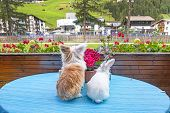 Rabbit And Hairy Cat Sitting At A Table Watching The Village poster
