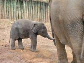 ein Elefanten-baby