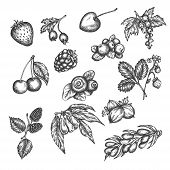 Berry Hand Drawn Vector Set. Sketch Of Fruits Vector Illustration. Berries Engraving Gooseberry, Ras poster