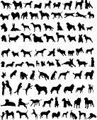 picture of animal silhouette  - 100 silhouettes of different breeds of dogs - JPG