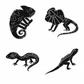 Vector Illustration Of Zoo And Environment Icon. Set Of Zoo And Reptile Stock Symbol For Web. poster