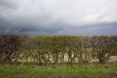 Stormy Hedgerow Background