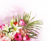 picture of day-lilies  - gentle pink and white spring flowers - JPG