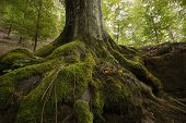 Tree with roots in a green forest