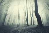 foto of eerie  - Dark eerie forest with fog and trees - JPG