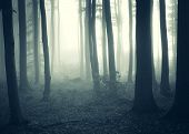 Dark forest with fog and strange light in autumn
