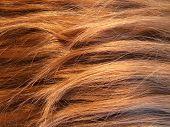 Hair - Texture