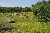Olive Trees Spring Flowers Old Stone Well