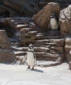 Penguins In The Sunshine