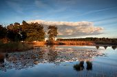 Sunset Sunlight Over Wild Lake With Water Lilies