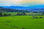 step level of rice field in Mea cham distric Chiangmai Thailand