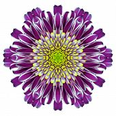 Mandala Chrysanthemum Flower Kaleidoscope Isolated On White