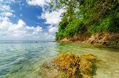 Lush Tropical Coastline