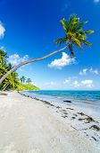 Deserted Beach And Palm Trees