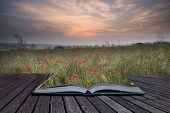 Creative Concept Pages Of Book Poppy Field Landscape In Summer Countryside Sunrise