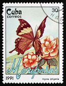 Postage Stamp Cuba 1991 Jazzy Leafwing, Butterfly