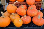 Brightly Colored Pumpkins at the Farmers Market