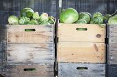 Fresh Fall Green Gourds and Crates in a Rustic Outdoor Fall Setting.