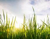 Worm's-eye View Of The The Grass And Sky In Sunlight
