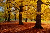 Park in the autumn time
