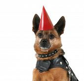 a dog in a leather motorcycle vest and a party hat on