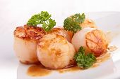picture of scallops  - scallop - JPG