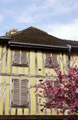 foto of tenement  - Medieval tenement and flowering almond tree in Troyes France - JPG
