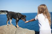 picture of stray dog  - little girl playing with stray dog on sea background - JPG