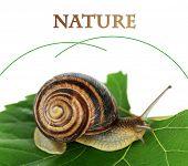 Snail on leaf close-up