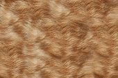 Texture Wool Red Dog