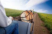 A horse pulling a cart accross a beautiful Saskatchewan landscape