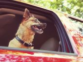 a dog riding in a car done with a soft instagram like filter