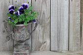 Antique vase with purple flowers (pansies)