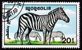 Postage Stamp Mongolia 1991 Zebra, African Animal