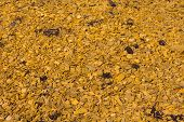 Yellow Wood Chippings