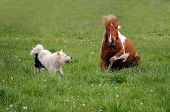 stock photo of laika  - Spotted horse plays with dog Laika on the background of grass - JPG