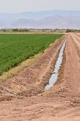 picture of alfalfa  - Alfalfa field and irrigation ditch in the Imperial Valley of California.