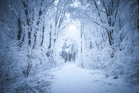 foto of snow forest  - Path trough a frozen forest with frost and snow in winter - JPG