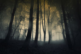 picture of moonlight  - Mysterious dark forest with rain and fog - JPG