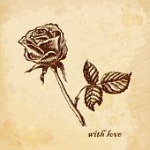 Vintage old background with rose with love. Hand drawing. Vector illustrations