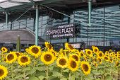 Sunflowers In Front Of A Shopping Centre At The Airport Of Amsterdam